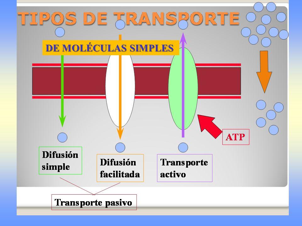 DE MOLÉCULAS SIMPLES