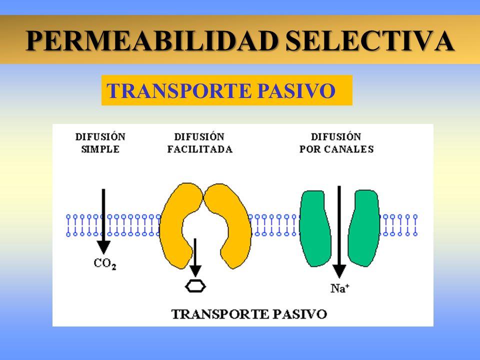PERMEABILIDAD SELECTIVA TRANSPORTE PASIVO