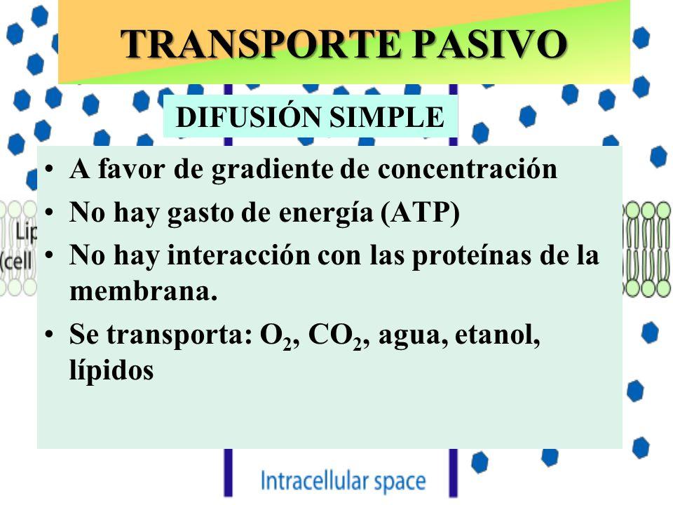 TRANSPORTE PASIVO A favor de gradiente de concentración No hay gasto de energía (ATP) No hay interacción con las proteínas de la membrana. Se transpor