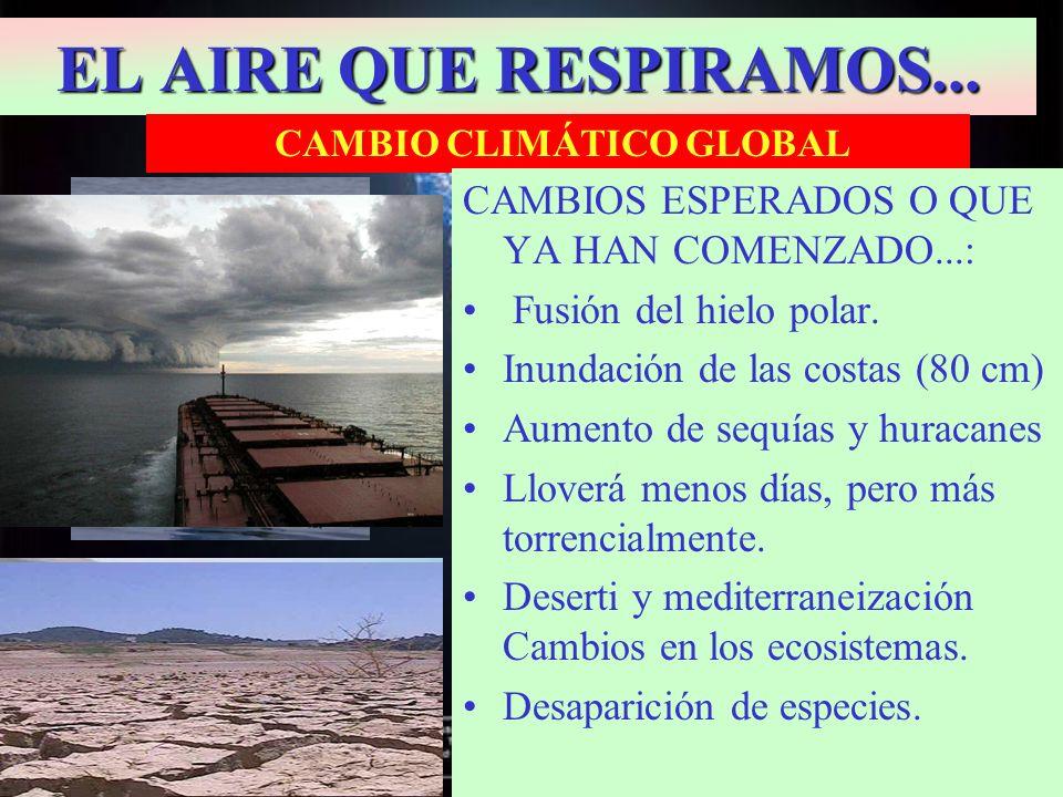 EL AIRE QUE RESPIRAMOS... CAMBIO CLIMÁTICO GLOBAL CAMBIOS ESPERADOS O QUE YA HAN COMENZADO...: Fusión del hielo polar. Inundación de las costas (80 cm