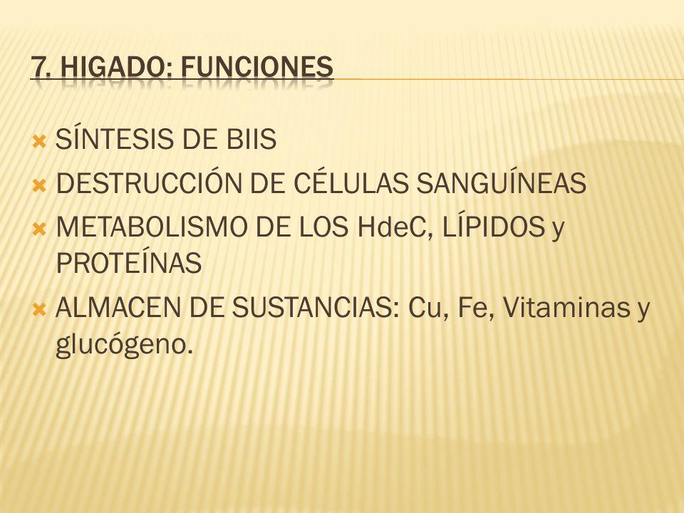 SÍNTESIS DE BIIS DESTRUCCIÓN DE CÉLULAS SANGUÍNEAS METABOLISMO DE LOS HdeC, LÍPIDOS y PROTEÍNAS ALMACEN DE SUSTANCIAS: Cu, Fe, Vitaminas y glucógeno.