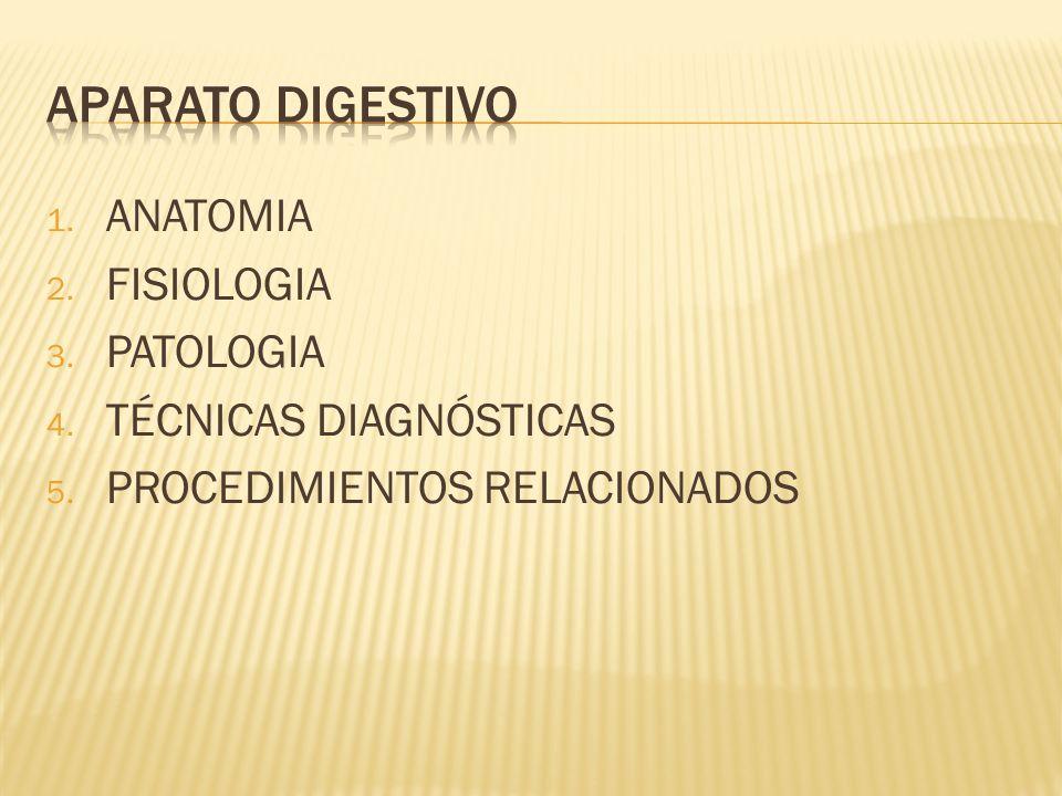 1. ANATOMIA 2. FISIOLOGIA 3. PATOLOGIA 4. TÉCNICAS DIAGNÓSTICAS 5. PROCEDIMIENTOS RELACIONADOS