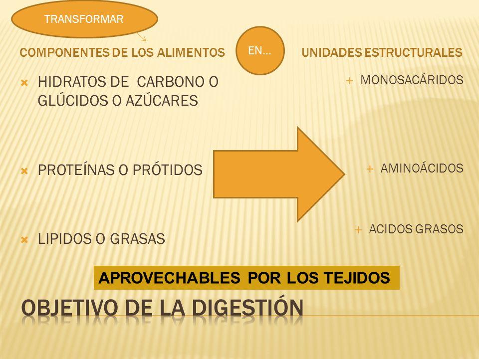 COMPONENTES DE LOS ALIMENTOS UNIDADES ESTRUCTURALES HIDRATOS DE CARBONO O GLÚCIDOS O AZÚCARES PROTEÍNAS O PRÓTIDOS LIPIDOS O GRASAS MONOSACÁRIDOS AMINOÁCIDOS ACIDOS GRASOS TRANSFORMAR EN… APROVECHABLES POR LOS TEJIDOS