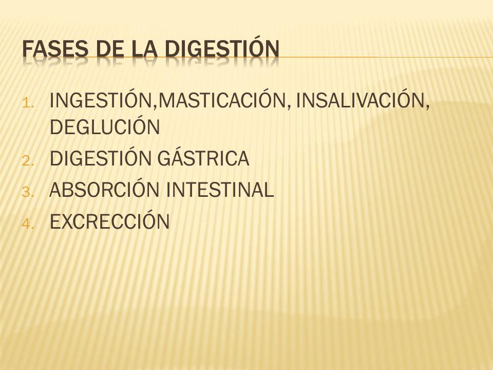 1.INGESTIÓN,MASTICACIÓN, INSALIVACIÓN, DEGLUCIÓN 2.