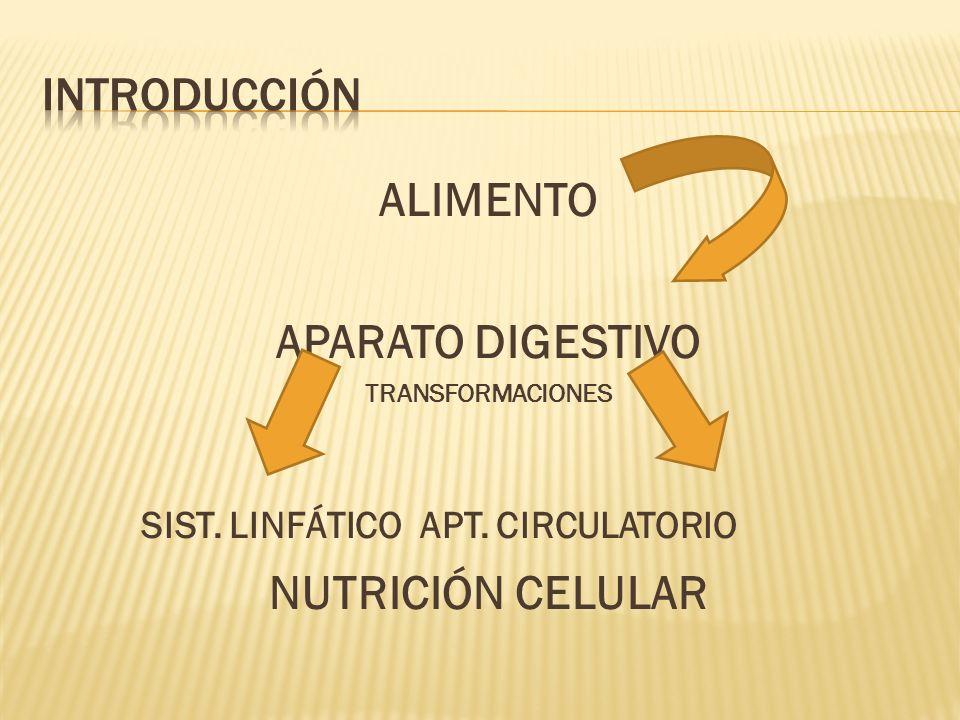 ALIMENTO APARATO DIGESTIVO TRANSFORMACIONES SIST. LINFÁTICO APT. CIRCULATORIO NUTRICIÓN CELULAR