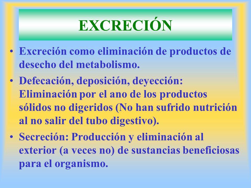 Excreción como eliminación de productos de desecho del metabolismo. Defecación, deposición, deyección: Eliminación por el ano de los productos sólidos