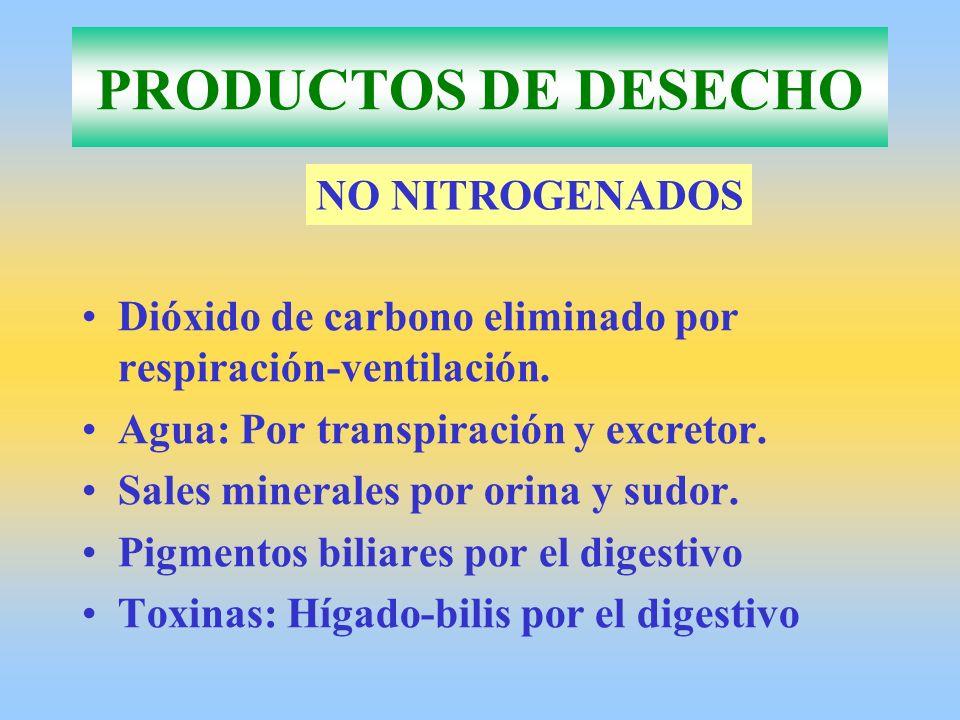 Cualquier órgano excretor lleva a cabo: –Filtración: Por diferencia de presión sale líquido del medio interno hacia el interior del órgano excretor.