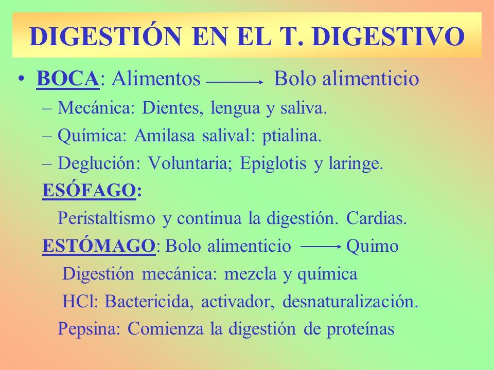 BOCA: Alimentos Bolo alimenticio –Mecánica: Dientes, lengua y saliva. –Química: Amilasa salival: ptialina. –Deglución: Voluntaria; Epiglotis y laringe
