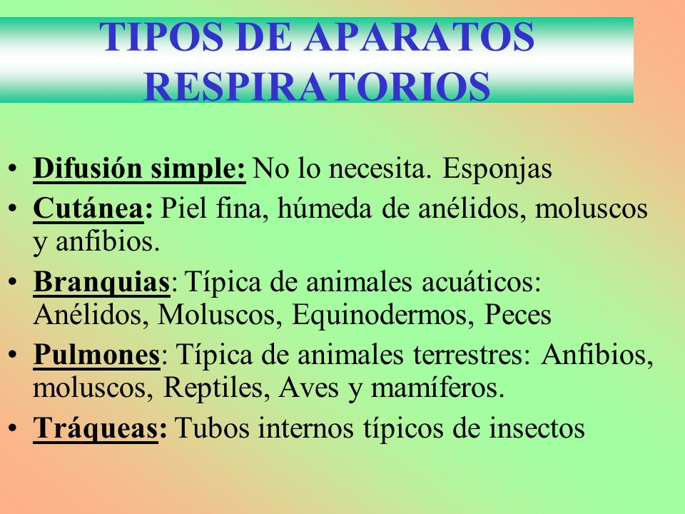 TIPOS DE APARATOS RESPIRATORIOS Difusión simple: No lo necesita. Esponjas Cutánea: Piel fina, húmeda de anélidos, moluscos y anfibios. Branquias: Típi