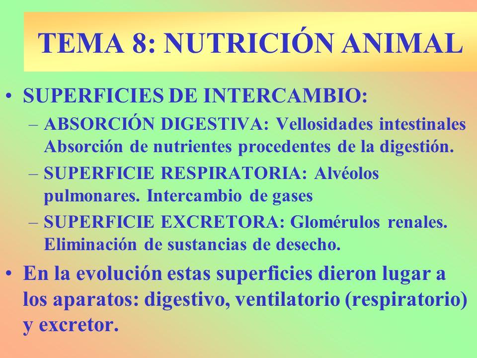 SUPERFICIES DE INTERCAMBIO: –ABSORCIÓN DIGESTIVA: Vellosidades intestinales Absorción de nutrientes procedentes de la digestión. –SUPERFICIE RESPIRATO