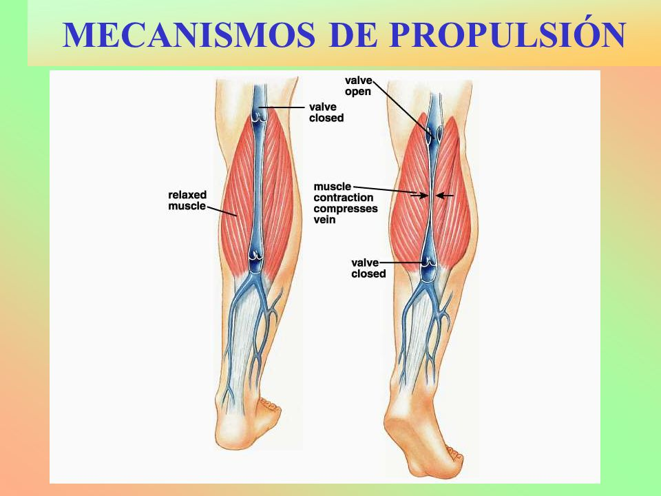 MECANISMOS DE PROPULSIÓN