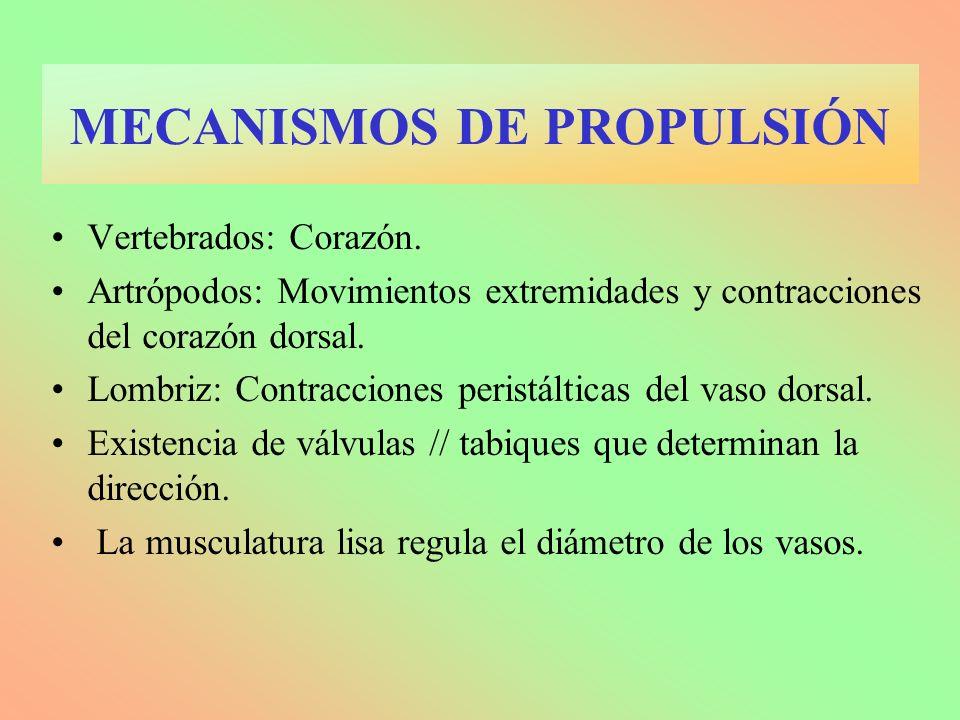 Vertebrados: Corazón. Artrópodos: Movimientos extremidades y contracciones del corazón dorsal. Lombriz: Contracciones peristálticas del vaso dorsal. E