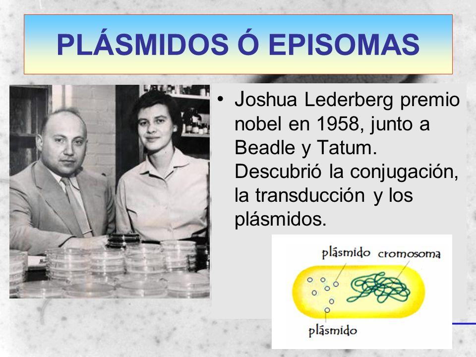 PLÁSMIDOS Ó EPISOMAS J oshua Lederberg premio nobel en 1958, junto a Beadle y Tatum. Descubrió la conjugación, la transducción y los plásmidos.