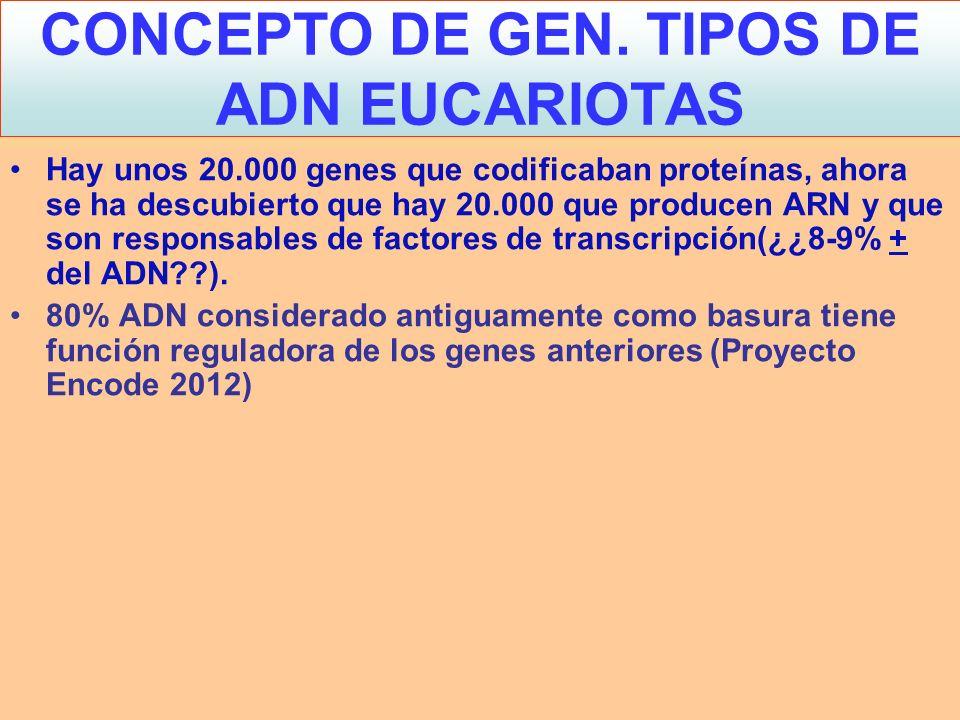 En los eucariotas el ADN está en forma: –EUCROMATINA: (ADN + Histonas):Fibra de 10- 11 nm y siempre se puede transcribir.