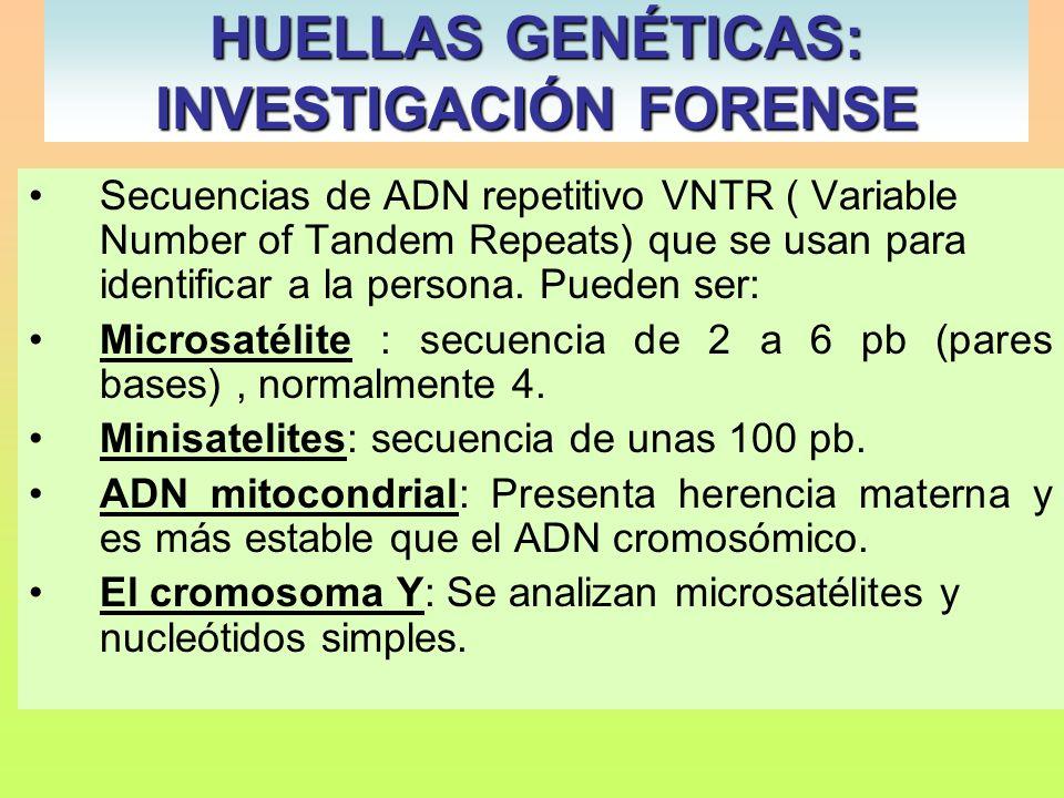 HUELLAS GENÉTICAS: INVESTIGACIÓN FORENSE Alec Jeffreys Secuencias de ADN repetitivo VNTR ( Variable Number of Tandem Repeats) que se usan para identif