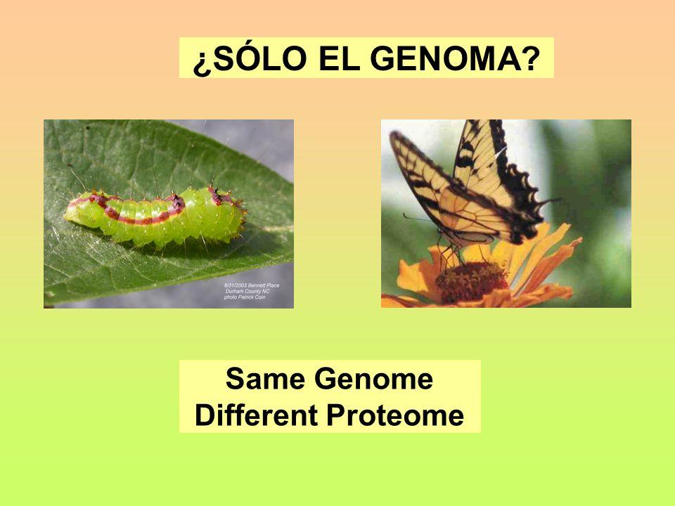 Same Genome Different Proteome ¿SÓLO EL GENOMA?
