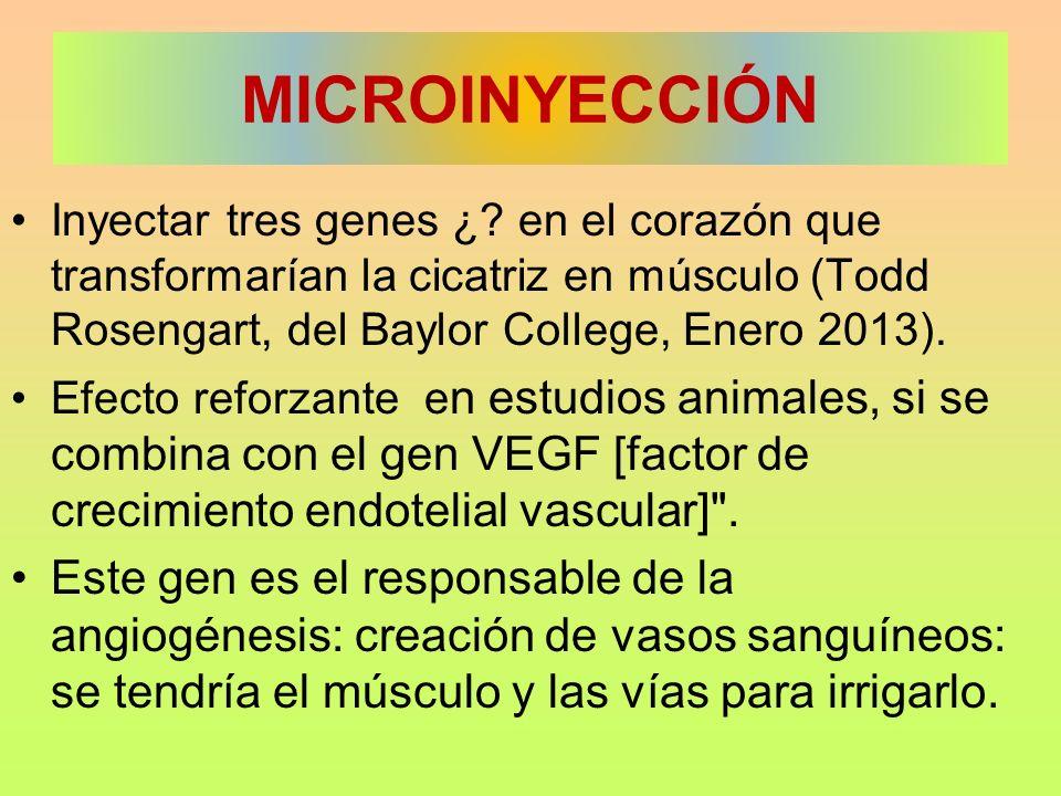 MICROINYECCIÓN Inyectar tres genes ¿? en el corazón que transformarían la cicatriz en músculo (Todd Rosengart, del Baylor College, Enero 2013). Efecto