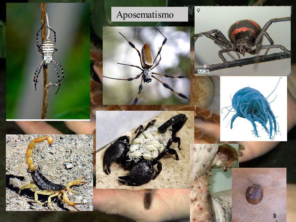 - Cl Reptiles: piel cubierta de escamas -Cl.Aves: plumas -Cl.