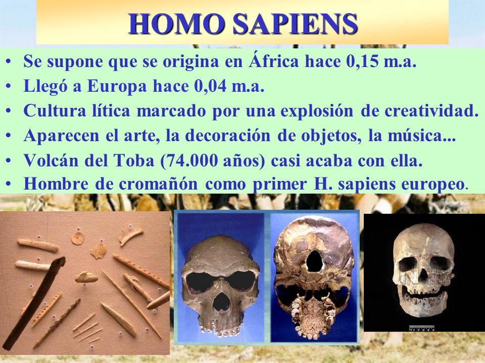 Se supone que se origina en África hace 0,15 m.a. Llegó a Europa hace 0,04 m.a. Cultura lítica marcado por una explosión de creatividad. Aparecen el a