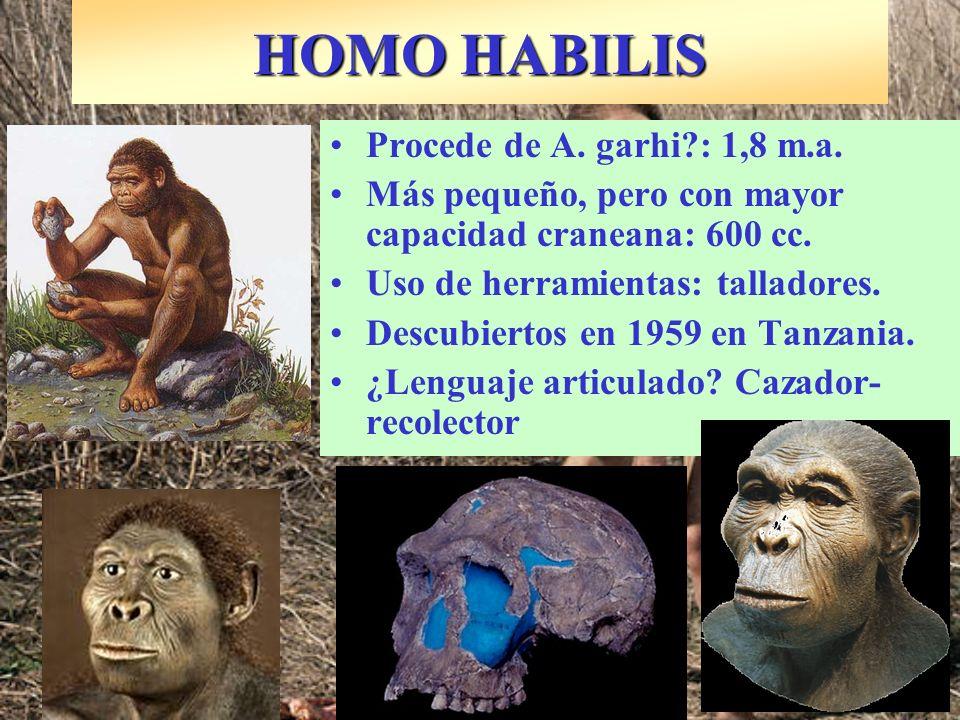 ¿Sustituyó o convivió con H.Habilis hace 1,6 m.a..