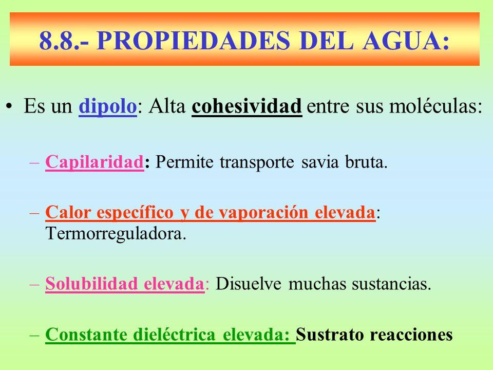 8.8.- PROPIEDADES DEL AGUA: Es un dipolo: Alta cohesividad entre sus moléculas: –Capilaridad: Permite transporte savia bruta. –Calor específico y de v