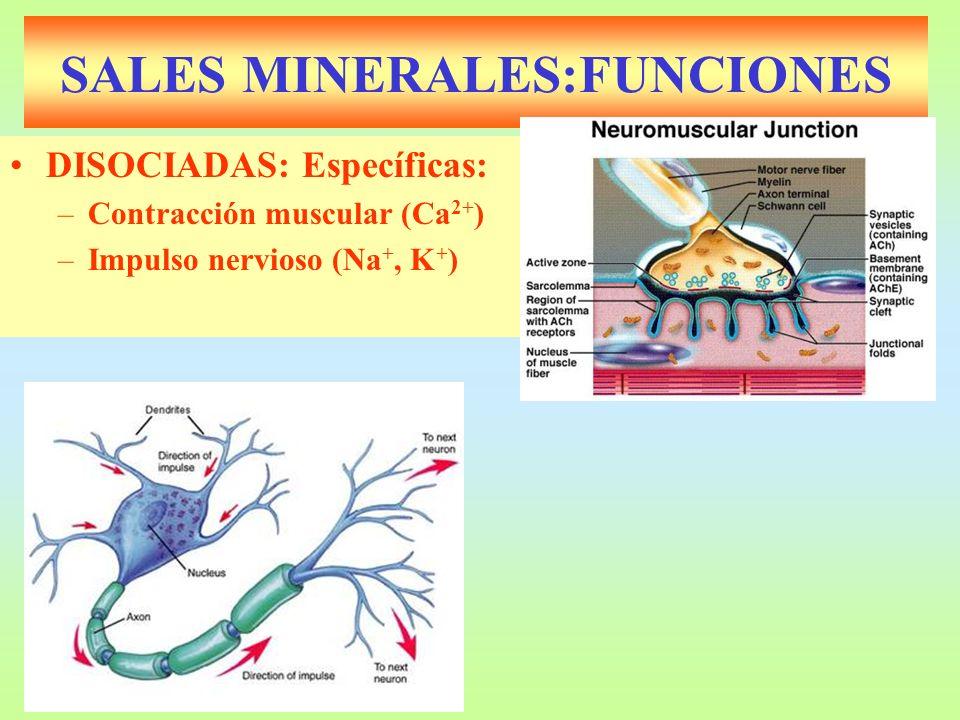 SALES MINERALES:FUNCIONES DISOCIADAS: Específicas: –Contracción muscular (Ca 2+ ) –Impulso nervioso (Na +, K + )