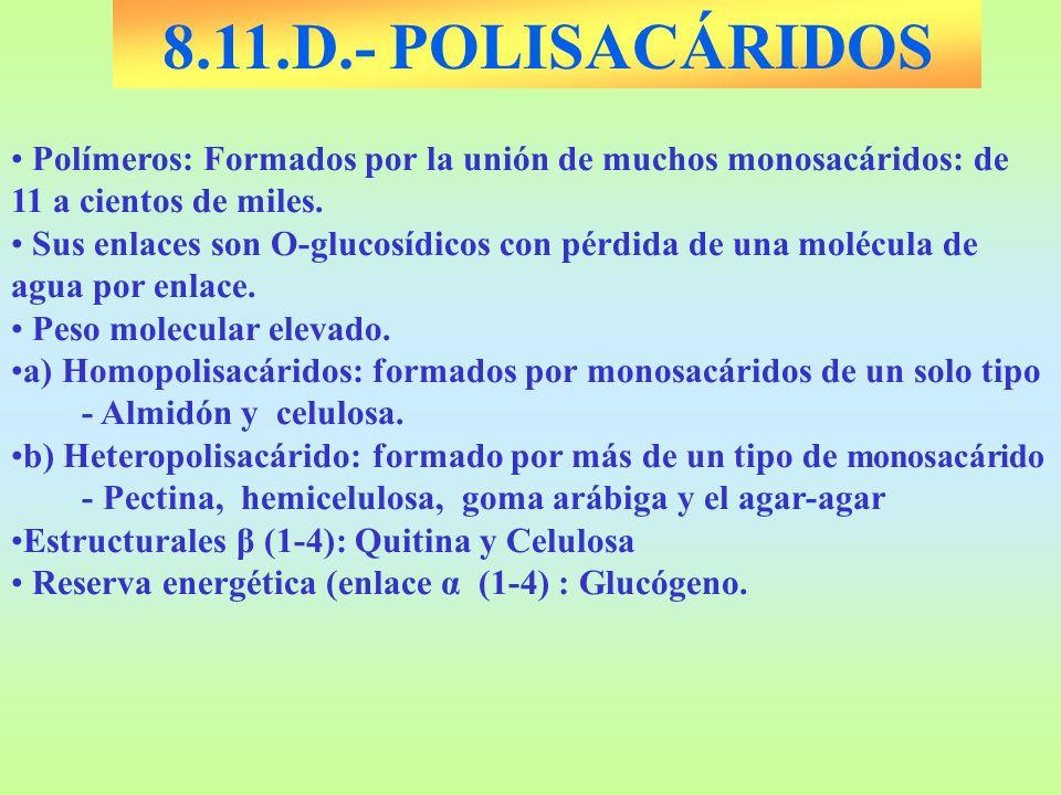 8.11.D.- POLISACÁRIDOS Polímeros: Formados por la unión de muchos monosacáridos: de 11 a cientos de miles. Sus enlaces son O-glucosídicos con pérdida