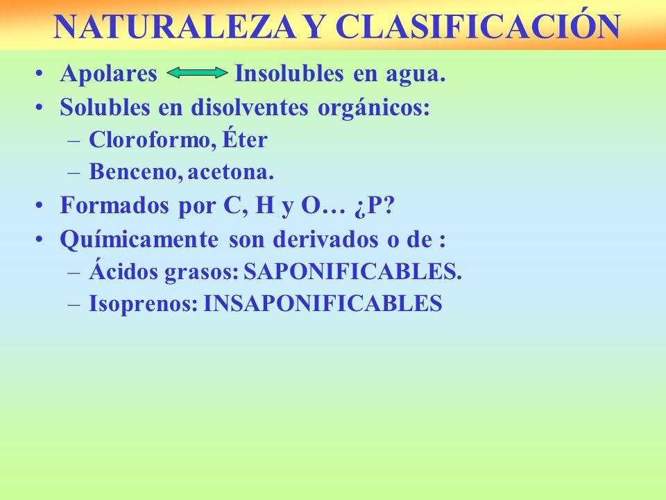 ApolaresInsolubles en agua. Solubles en disolventes orgánicos: –Cloroformo, Éter –Benceno, acetona. Formados por C, H y O… ¿P? Químicamente son deriva