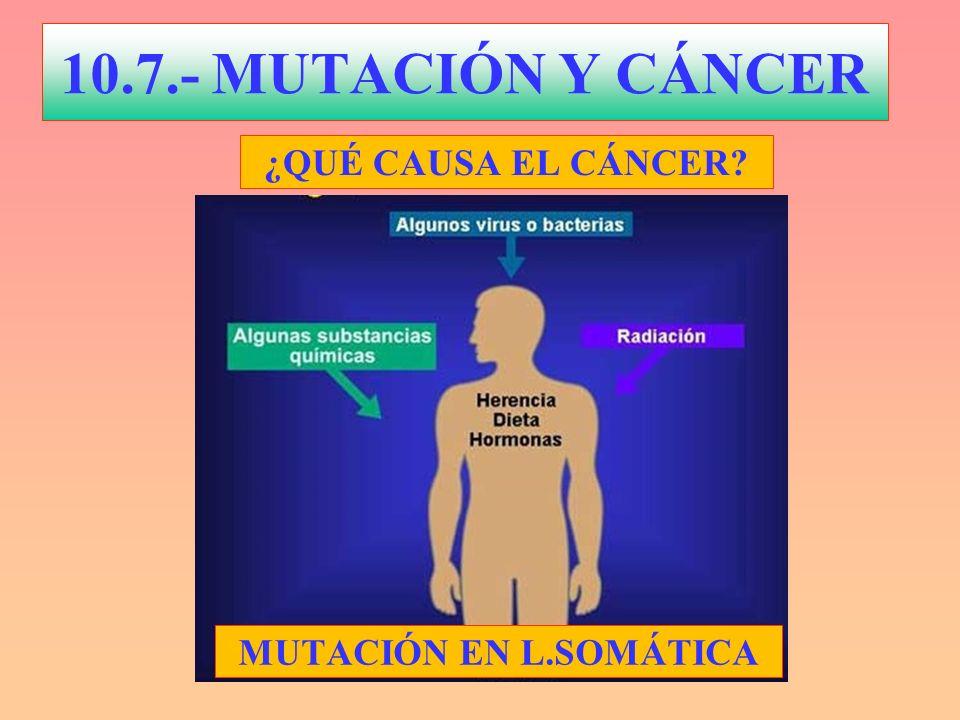 10.7.- MUTACIÓN Y CÁNCER ¿QUÉ CAUSA EL CÁNCER? MUTACIÓN EN L.SOMÁTICA
