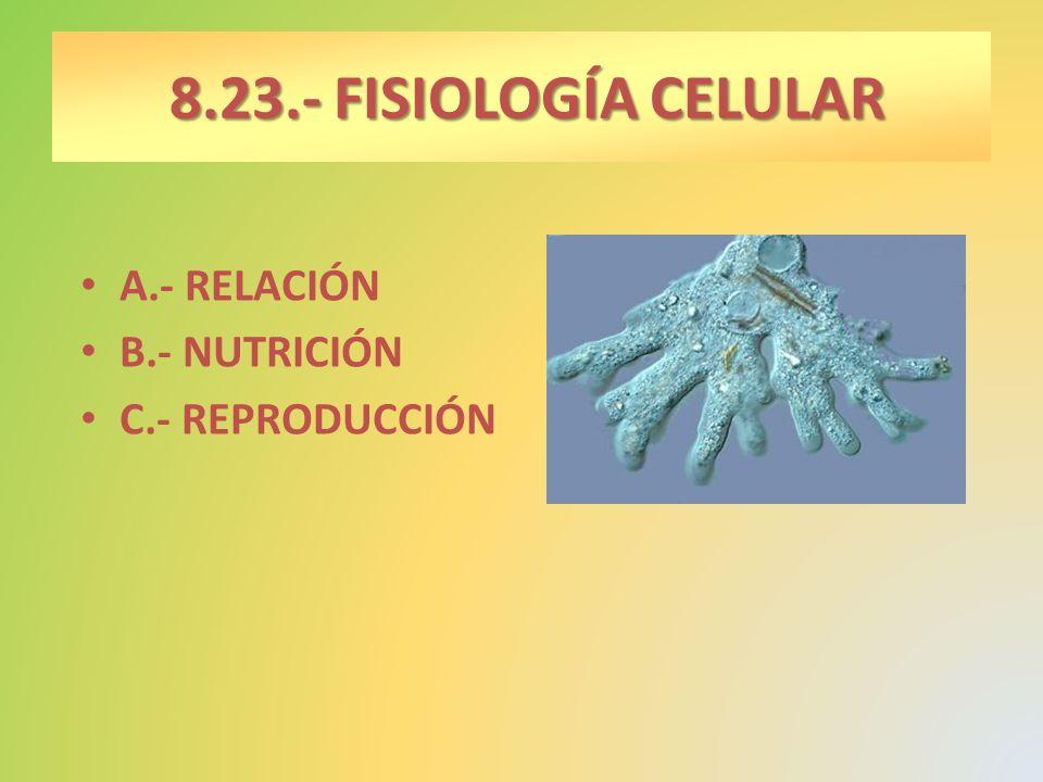 8.23.- FISIOLOGÍA CELULAR A.- RELACIÓN B.- NUTRICIÓN C.- REPRODUCCIÓN