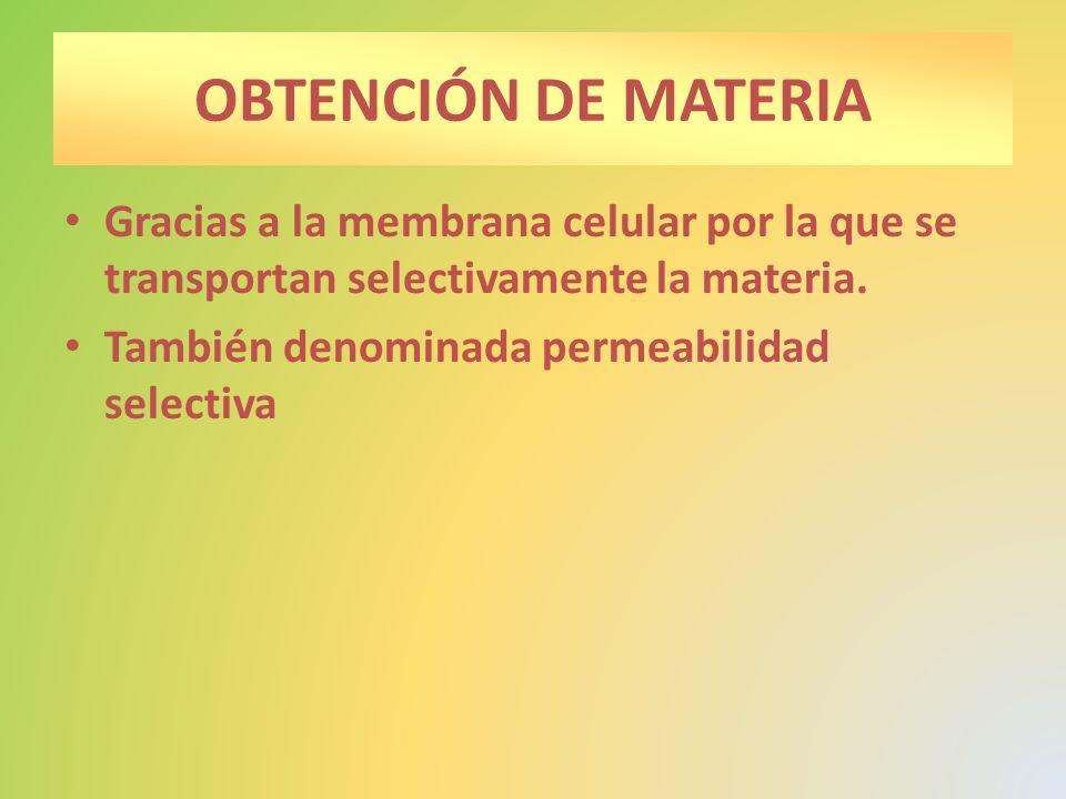 OBTENCIÓN DE MATERIA Gracias a la membrana celular por la que se transportan selectivamente la materia. También denominada permeabilidad selectiva