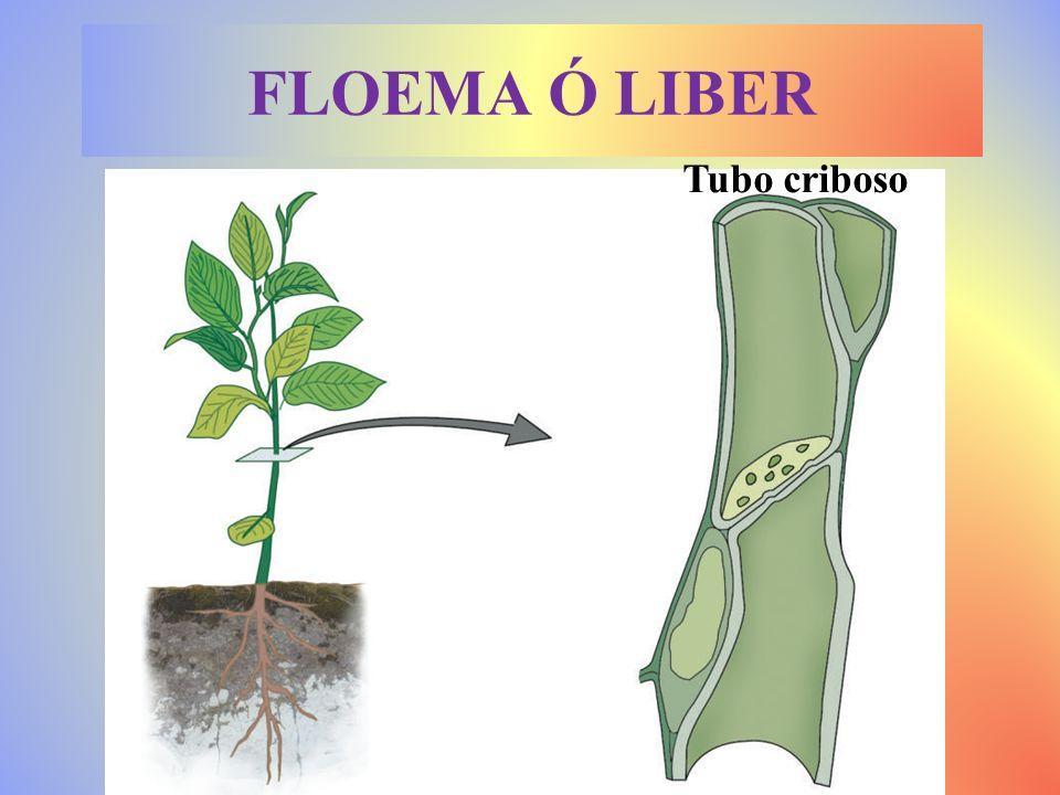 Lactario Ortiga Elaboran sustancias útiles o de desecho.