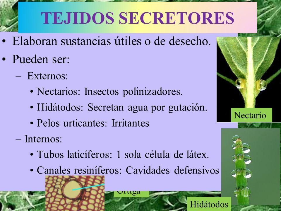 Lactario Ortiga Elaboran sustancias útiles o de desecho. Pueden ser: – Externos: Nectarios: Insectos polinizadores. Hidátodos: Secretan agua por gutac