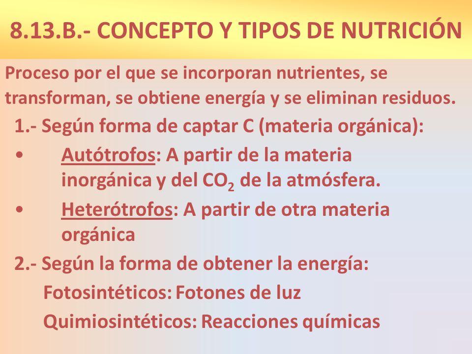 FASES DE LA NUTRICIÓN HETERÓTROFA Captar nutrientes a través de los alimentos.