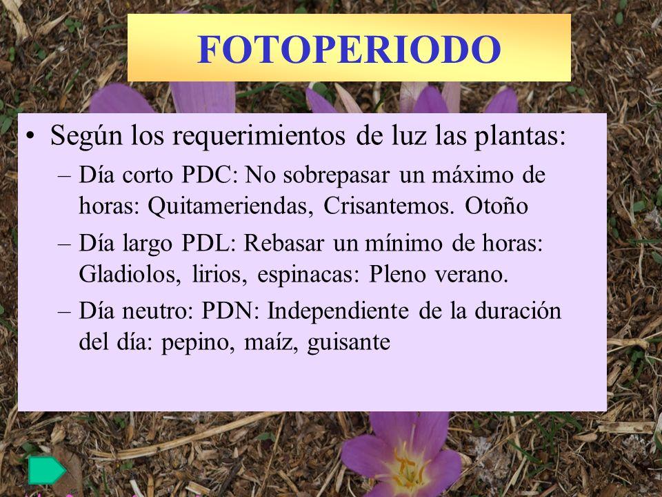 FOTOPERIODO Según los requerimientos de luz las plantas: –Día corto PDC: No sobrepasar un máximo de horas: Quitameriendas, Crisantemos. Otoño –Día lar