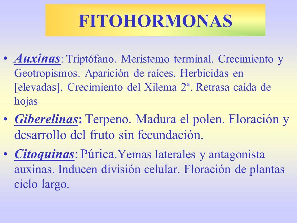 FITOHORMONAS Auxinas : Triptófano. Meristemo terminal. Crecimiento y Geotropismos. Aparición de raíces. Herbicidas en [elevadas]. Crecimiento del Xile