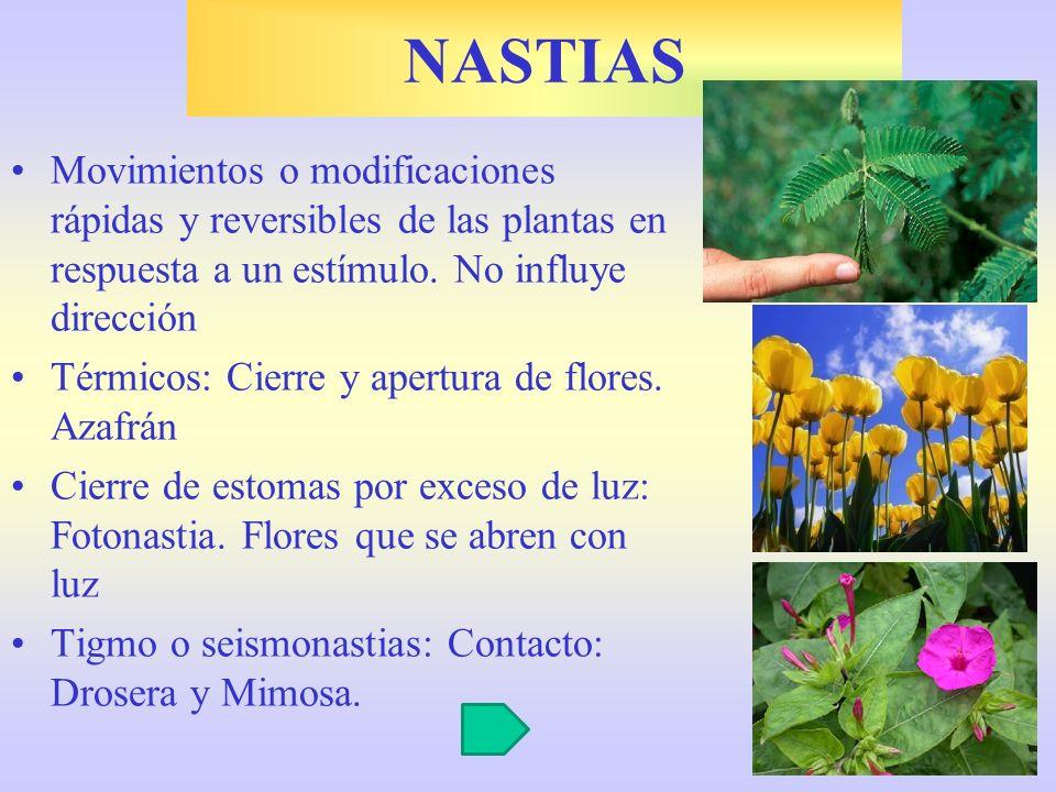 Movimientos o modificaciones rápidas y reversibles de las plantas en respuesta a un estímulo. No influye dirección Térmicos: Cierre y apertura de flor