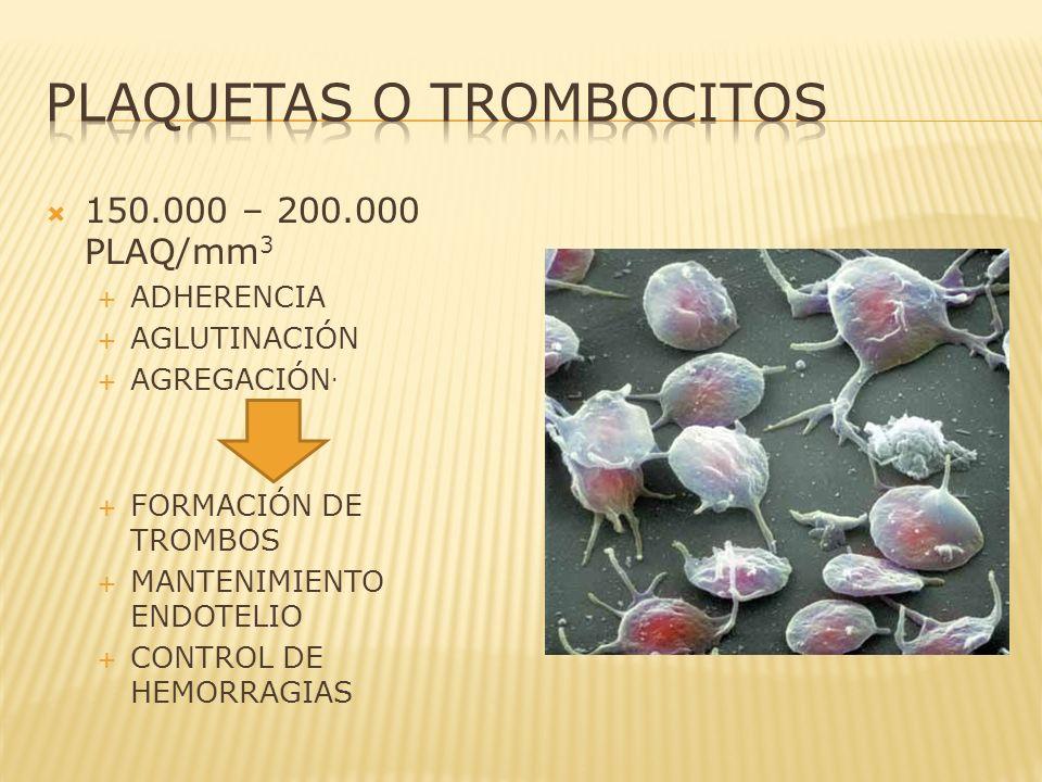 150.000 – 200.000 PLAQ/mm 3 ADHERENCIA AGLUTINACIÓN AGREGACIÓN. FORMACIÓN DE TROMBOS MANTENIMIENTO ENDOTELIO CONTROL DE HEMORRAGIAS