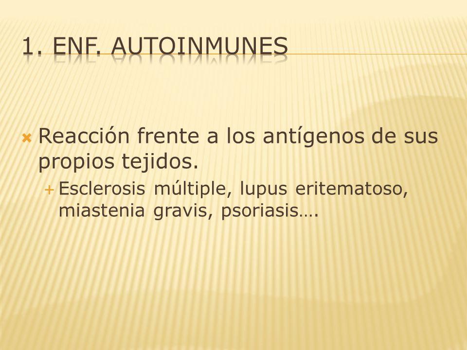 Reacción frente a los antígenos de sus propios tejidos. Esclerosis múltiple, lupus eritematoso, miastenia gravis, psoriasis….