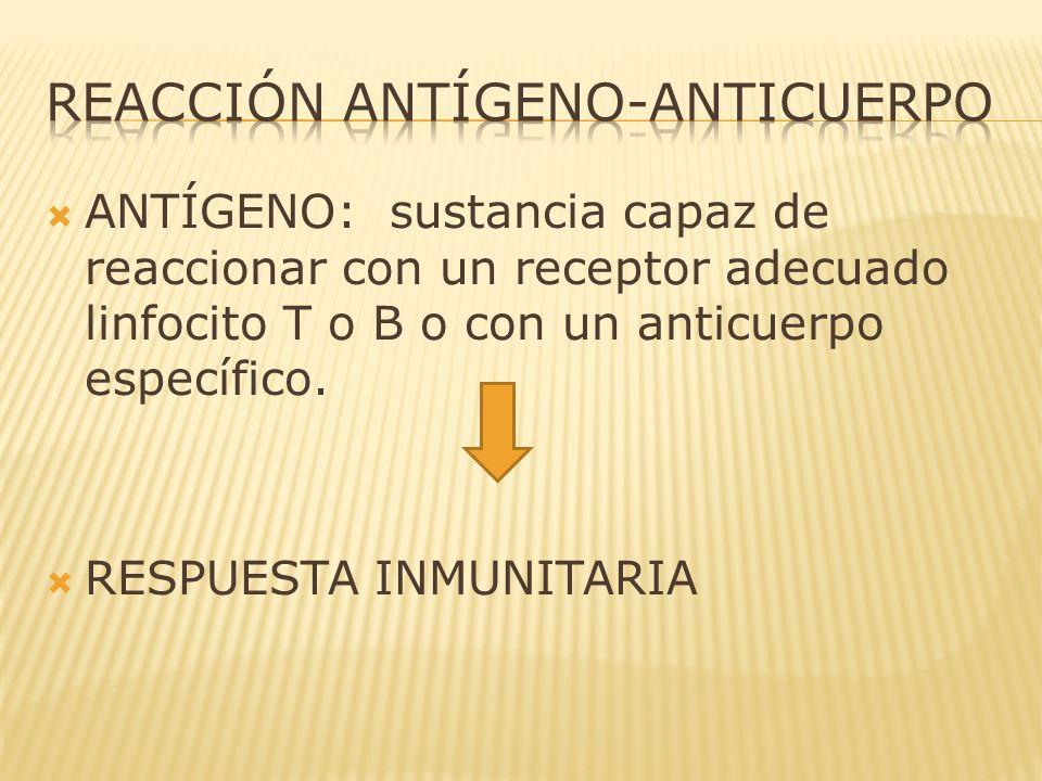 ANTÍGENO: sustancia capaz de reaccionar con un receptor adecuado linfocito T o B o con un anticuerpo específico. RESPUESTA INMUNITARIA