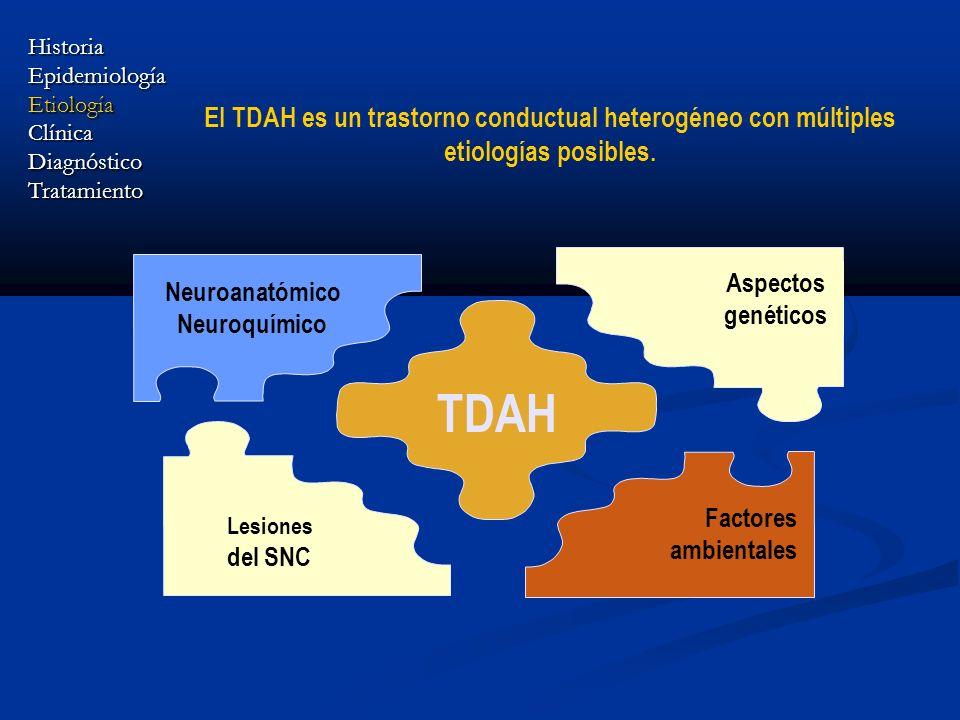 El TDAH es un trastorno conductual heterogéneo con múltiples etiologías posibles. TDAH Neuroanatómico Neuroquímico Lesiones del SNC Aspectos genéticos
