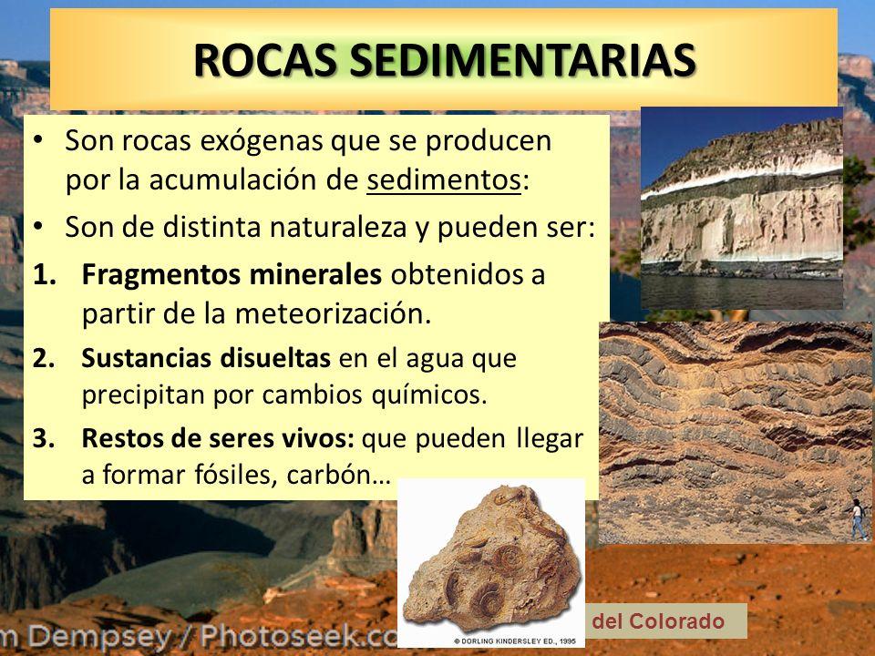 ROCAS SEDIMENTARIAS Son rocas exógenas que se producen por la acumulación de sedimentos: Son de distinta naturaleza y pueden ser: 1.Fragmentos mineral