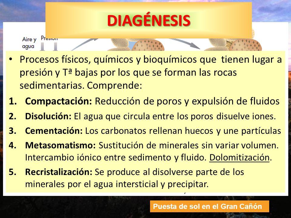 DIAGÉNESIS Procesos físicos, químicos y bioquímicos que tienen lugar a presión y Tª bajas por los que se forman las rocas sedimentarias. Comprende: 1.