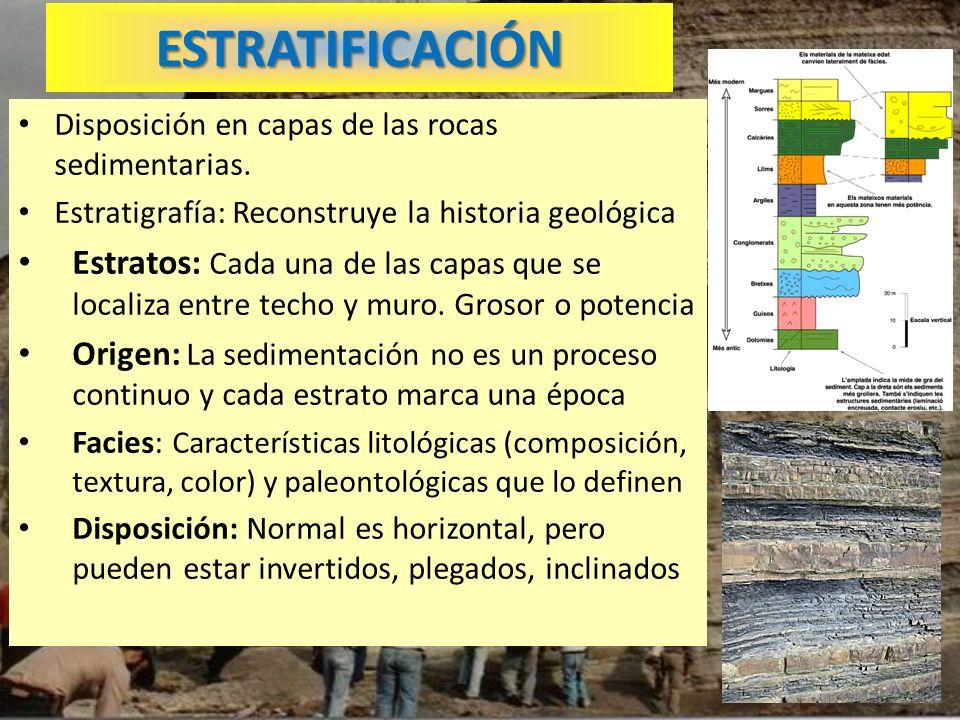 ESTRATIFICACIÓN Disposición en capas de las rocas sedimentarias. Estratigrafía: Reconstruye la historia geológica Estratos: Cada una de las capas que