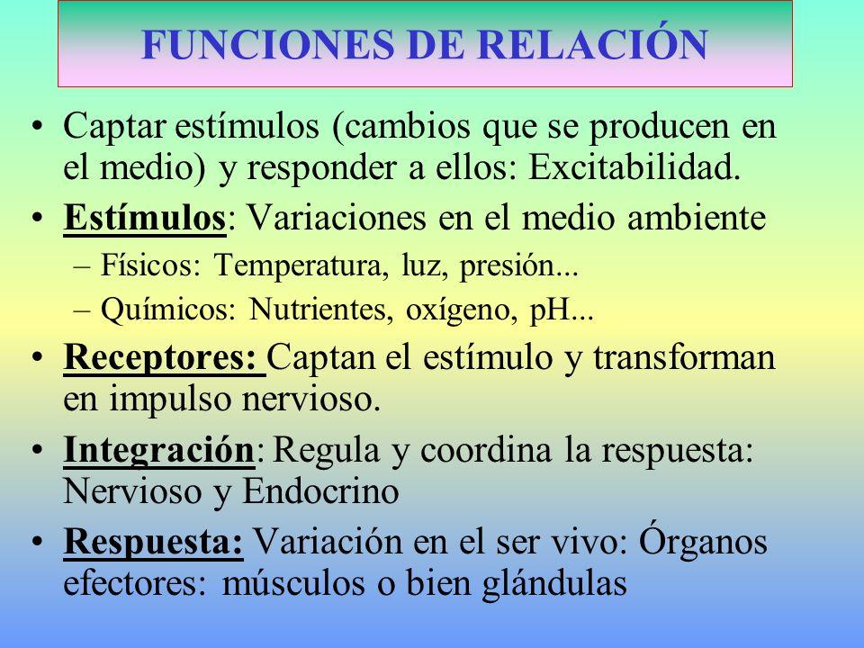 Coordinación-Homeostasis: –Nerviosa: impulsos nerviosos, específica, rápida, breve y por nervios.