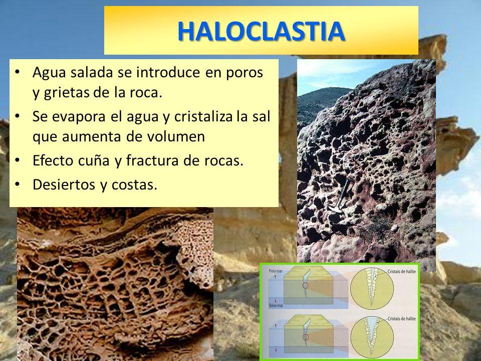 HALOCLASTIA Agua salada se introduce en poros y grietas de la roca. Se evapora el agua y cristaliza la sal que aumenta de volumen Efecto cuña y fractu