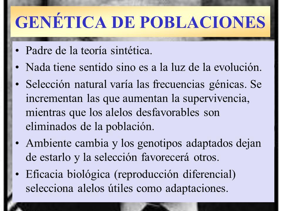 Theodosius Dobzhansky: 1937 Padre de la teoría sintética. Nada tiene sentido sino es a la luz de la evolución. Selección natural varía las frecuencias
