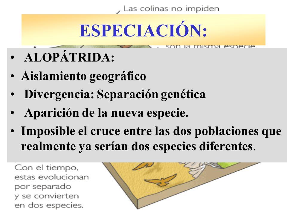 ALOPÁTRIDA: Aislamiento geográfico Divergencia: Separación genética Aparición de la nueva especie. Imposible el cruce entre las dos poblaciones que re