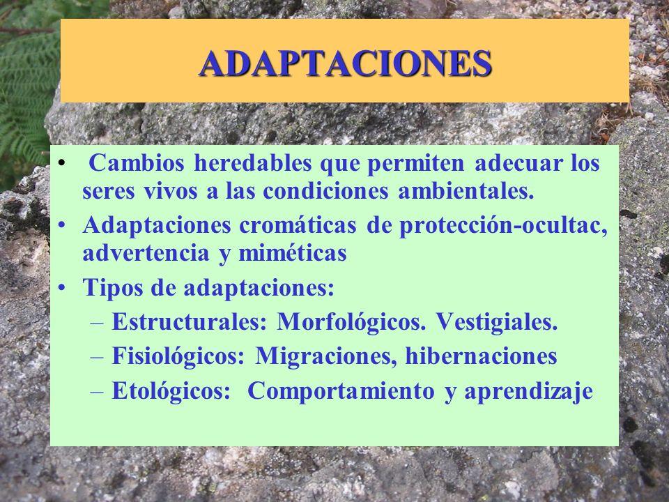 ADAPTACIONES Cambios heredables que permiten adecuar los seres vivos a las condiciones ambientales. Adaptaciones cromáticas de protección-ocultac, adv