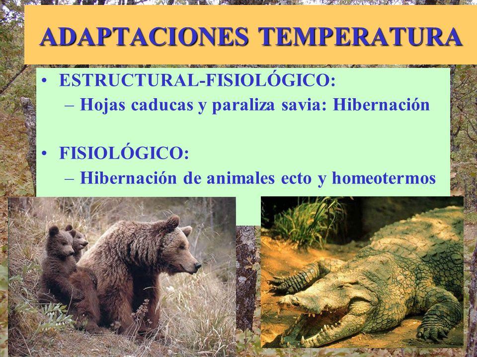 ADAPTACIONES TEMPERATURA ESTRUCTURAL-FISIOLÓGICO: –Hojas caducas y paraliza savia: Hibernación FISIOLÓGICO: –Hibernación de animales ecto y homeotermo